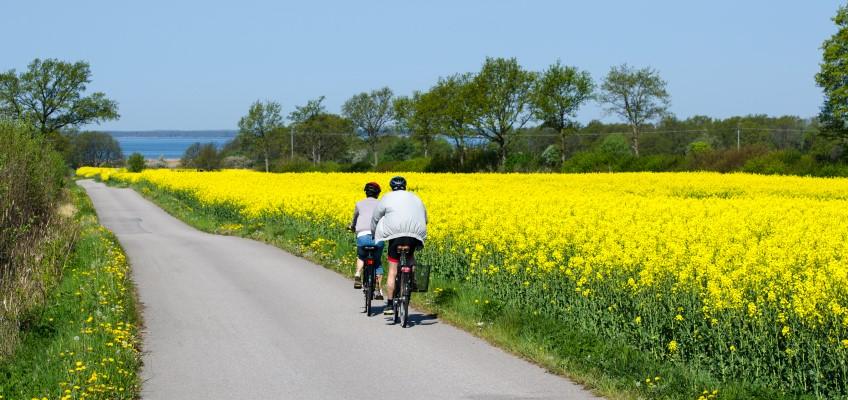 Cyklister i vårlandskap Foto:Mostphotos Kennerth Kullman